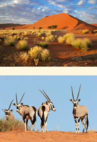 namibia-side